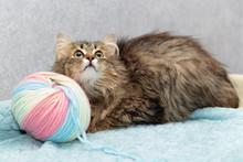 Fluffy Breedless Cat Lies Next...
