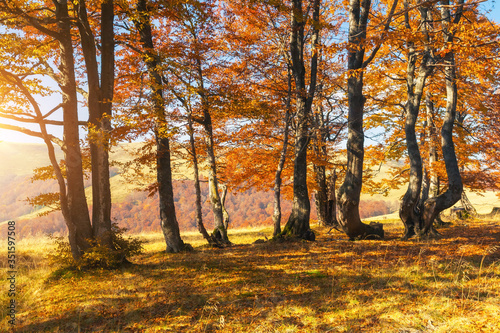 Fototapety, obrazy: Beautiful sunny day in autumnal forest.