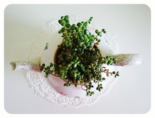 Directly Above Shot Of Succulent Plant In Teapot On Table