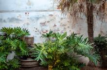 Ferns And Fountain In Garden