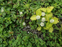 High Angle View Of Flowering Plant Leaves On Field