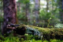Close-up Of Lichen On Tree