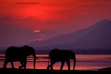 Elephant At Mana Pools NP, Zim...