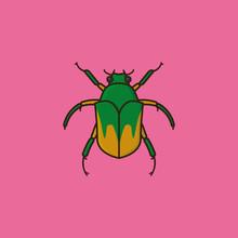 June Bug Or June Beetle Vector Illustration For June Bug Day