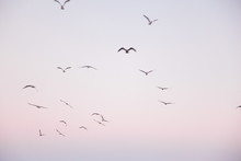 Low Angle View Of Flock Of Birds Flying In Sky