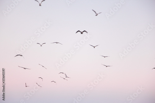 Valokuva Low Angle View Of Flock Of Birds Flying In Sky