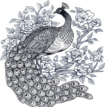 Vector Ink Peacock Flowers Ill...