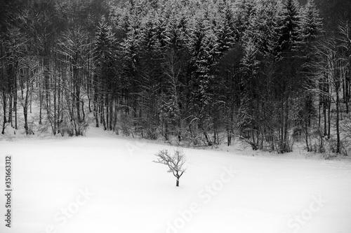 Fototapeta Bare Trees On Snowfield During Winter