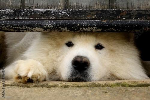 Canvastavla Portrait Of Dog Under Fence