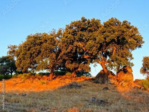 Fotografie, Obraz Trees On Field Against Clear Sky During Autumn