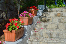 Steps With  Clay Planters With...