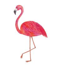 Pink Flamingo Isolated On Whit...
