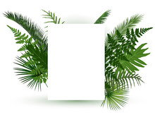 Green Tropical Leaves Frame For Random Text On White Background.