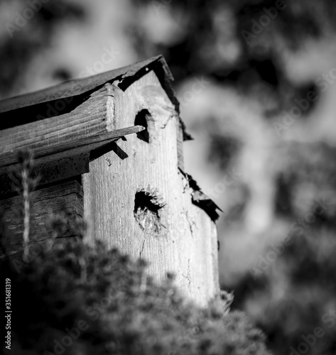 Canvas Low Angle View Of Wooden Birdhouse Against Trees
