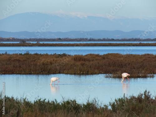 nature Camargue Fototapeta