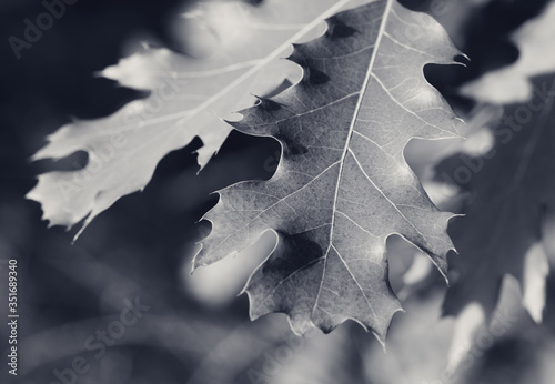 Photo Branches of oak tree