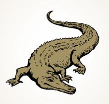 Crocodile. Vector Drawing Anim...