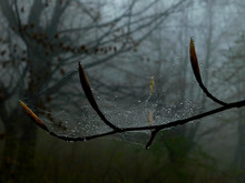 Close-up Of Wet Spider Web On Branch During Rainy Season