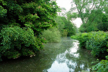 Beautiful English Tranquil River Scene With Overhanging Trees