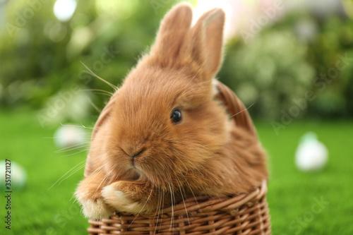 Obraz Adorable fluffy bunny in wicker basket outdoors, closeup. Easter symbol - fototapety do salonu