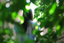 Rear View Of Woman With Blurred Plants In Foreground