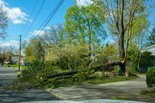 A Broken Branch Of A Large Tree Laying On The Ground Near The Street