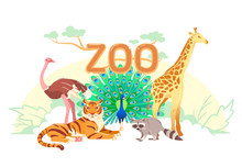 Zoo Flat Web Banner. Group Of Cartoon Animals On White Horizontal Cover Or Social Media Header. Ostrich Giraffe Tiger Raccoon Peacock Simple Nature Poster, Exotic Animal Vector Card. Children Postcard