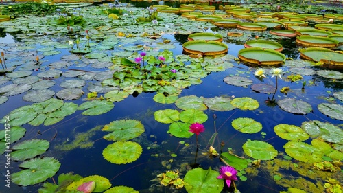 Canvas-taulu High Angle View Of Lily Pads Floating On Water