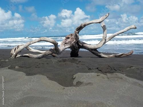 Fototapeta Driftwood On Black Sand Beach Against Sky obraz na płótnie