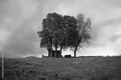 Fototapety, obrazy: Low Angle View Of Trees On Field Against Cloudy Sky