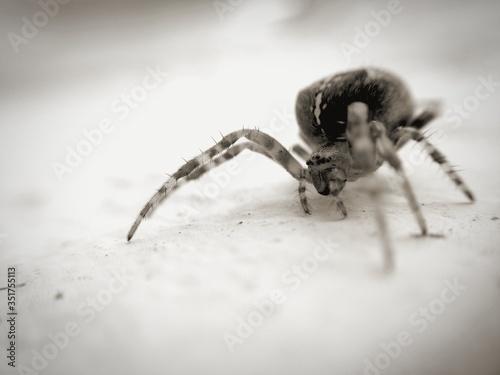 Close-up Of Tiny Spider Fototapeta