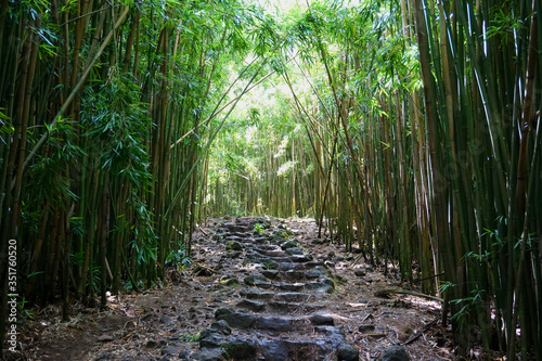 Tela Empty Steps Amidst Bamboos In Forest