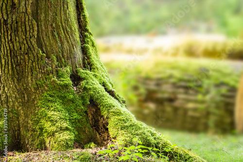 Obraz na plátně Close-up Of Moss Growing On Tree Trunk