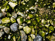 High Angle View Of Moss Covered Rocks On Field