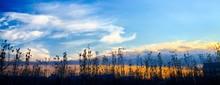 Silhouette Plants By Calm Lake...