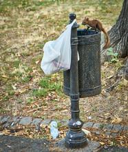 Squirrel On Garbage Bin At Park