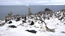 Group Of Penguins On The Snow ...
