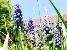Close Up Of Purple Wildflowers
