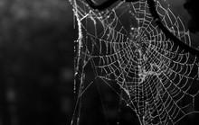 Macro Shot Of Wet Spider Web