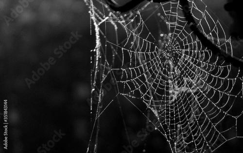 Foto Macro Shot Of Wet Spider Web