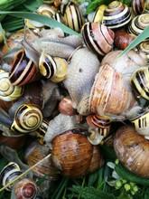 Full Frame Shot Of Snails And Slugs