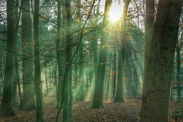 Trees Growing In Forest On Sunny Day