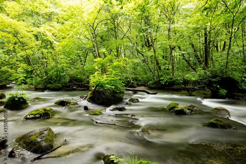 Fototapety, obrazy: River Flowing Through Rocks In Forest