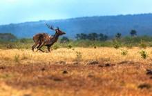 Deer Running On Field