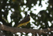 Luis Gordi Cuello Cantando En El árbol