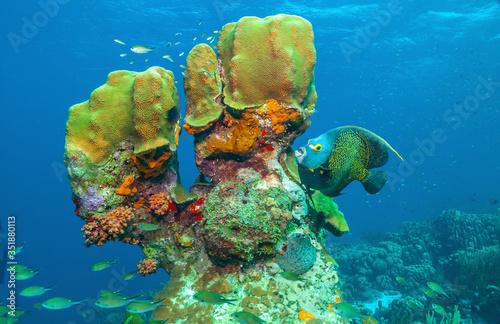 Caribbean coral garden #351880113