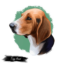 Trigg Hound Puppy Isolated Digital Art Illustration. Hand Drawn Dog Muzzle Portrait, Puppy Cute Pet. Dog Breeds Originating From United States. American English Foxhound, Bred To Hunt Foxes By Scent.