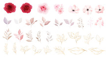 Floral Elements Vector Set. Bo...