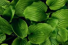 Green Leaves Pattern. Beautifu...