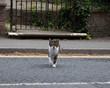Cat walking across a road
